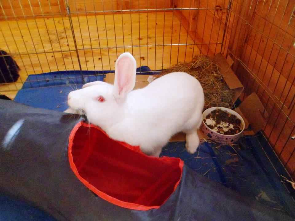 Melinda, Pauline's Adopted Rabbit