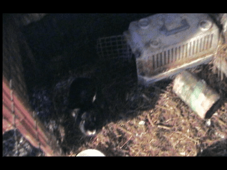 An image taken from one of our early rescue cases of over 20 rabbits.