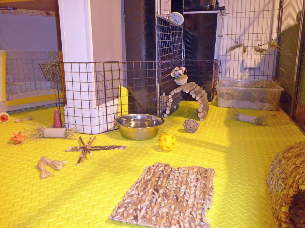 Indoor pen area - exceeds RWAF recommendations, with additional exercise time through the house.