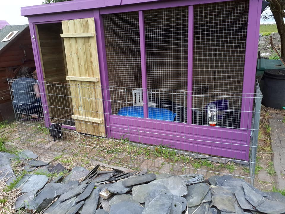 One of our foster sheds - combined 10ft x 6ft space.