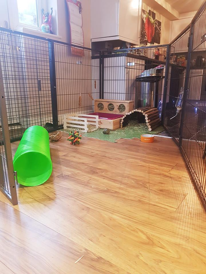Indoor foster living space using MargoTheDog pens, with access to household rooms for additional exercise space.