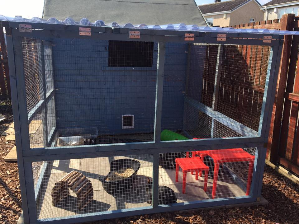 Outdoor Shed & Run Environment exceeds RWAF recommendations.