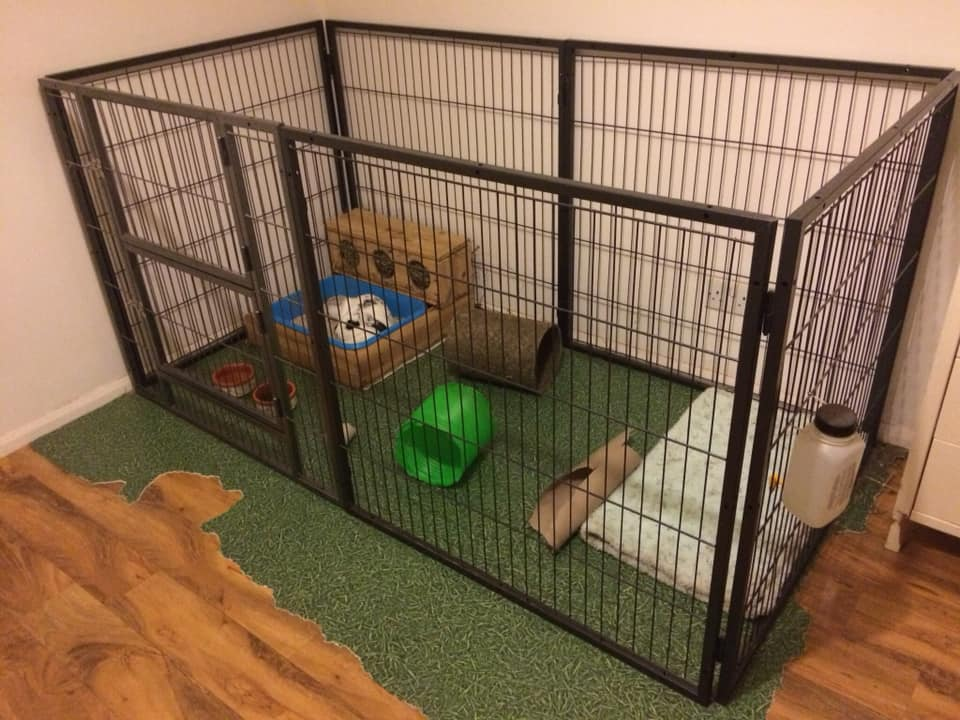 Indoor foster living space.  The rabbits get access to the whole room for exercise when foster carers are home.