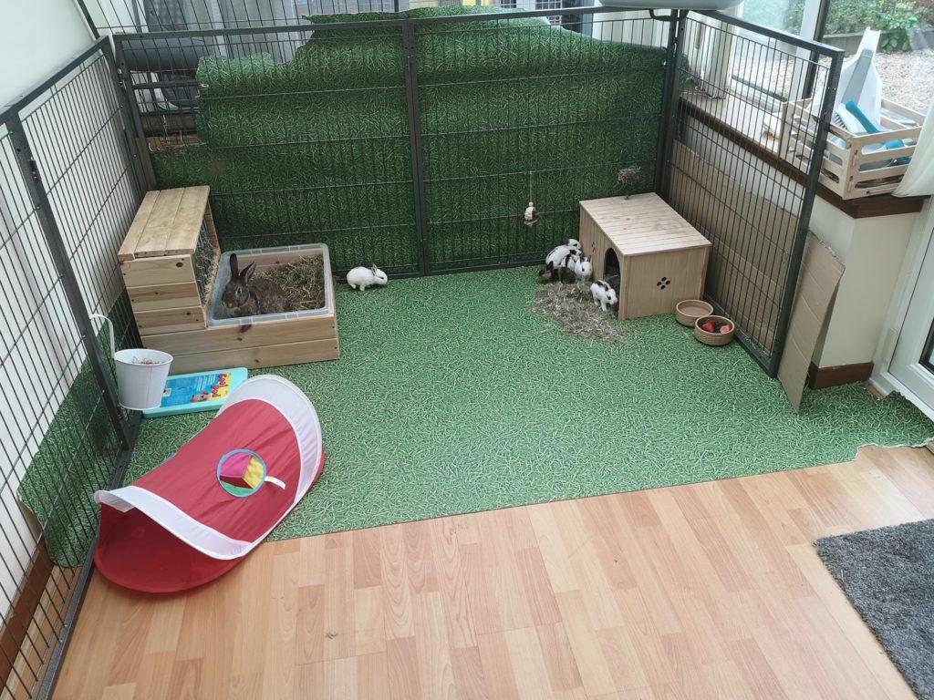 Indoor foster environment.