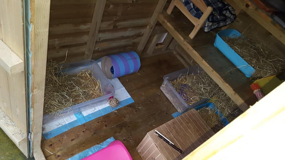 Inside one of our foster sheds (the sheltered compartment)
