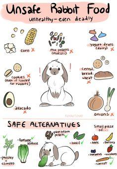 c8883fab6dea52458db29338d4fc9fb0--rabbit-eating-rabbit-food (1)