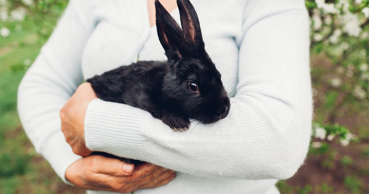 rabbit-holding-og