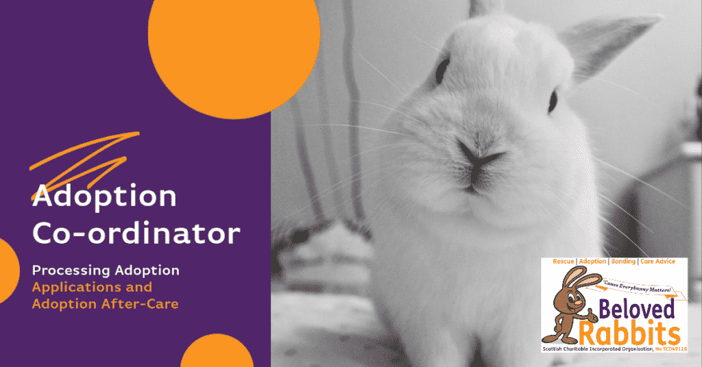 Adoption Co-Ordinator