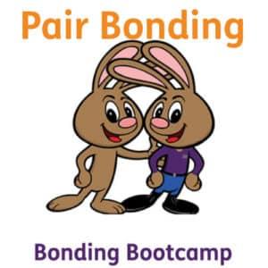 Bootcamp Pair Bonding